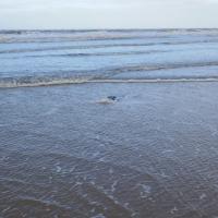 Sea Dipping